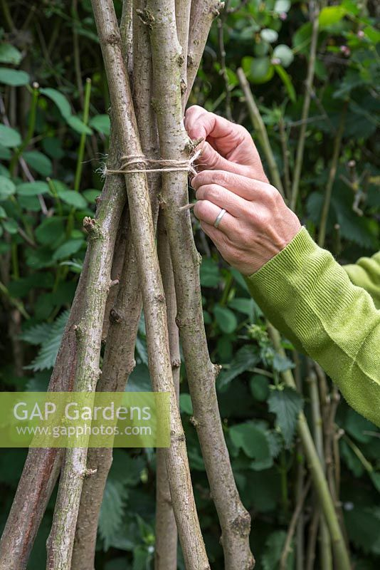 Secure the Hazel sticks together with string, roughly 1 foot from the top of the Teepee