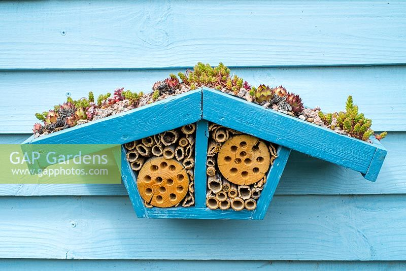 Wildlife gardening -  home made bug box with living roof of succulents placed on side of garden shed.