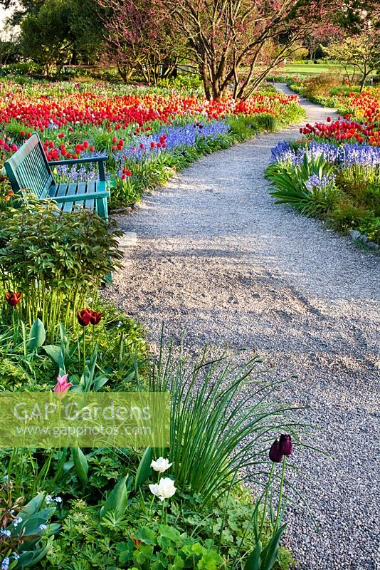 Meadow of tulips and bluebells. Gravel path. Bench. Weinheim, Hermannshof, Germany