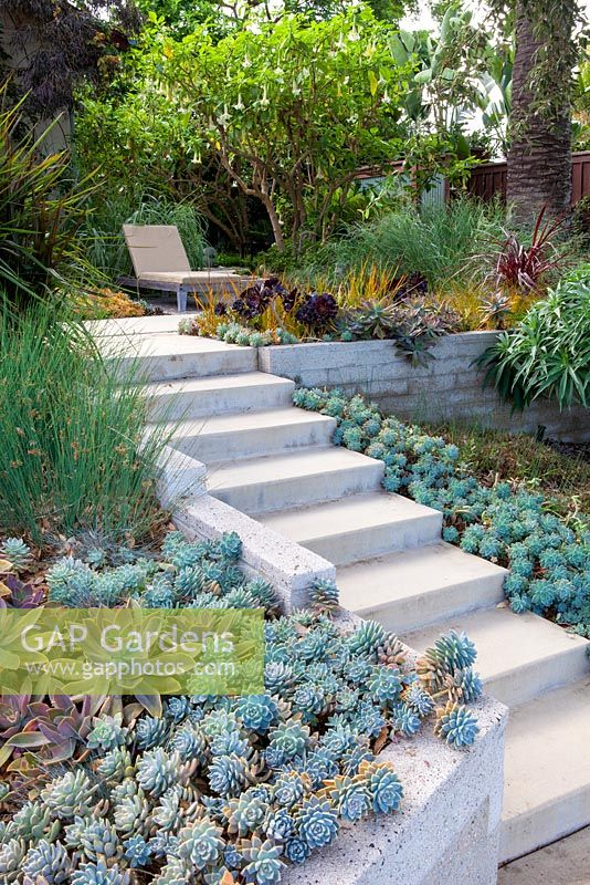 View of concrete steps planted either side with succulents with sun lounger. Debora Carl's garden, Encinitas, California, USA. August.