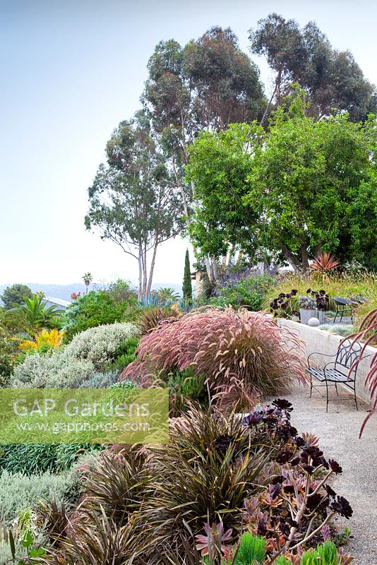 View of outside seating area with view with ornamental grasses and Aeoniums. Debora Carl's garden, Encinitas, California, USA. August.