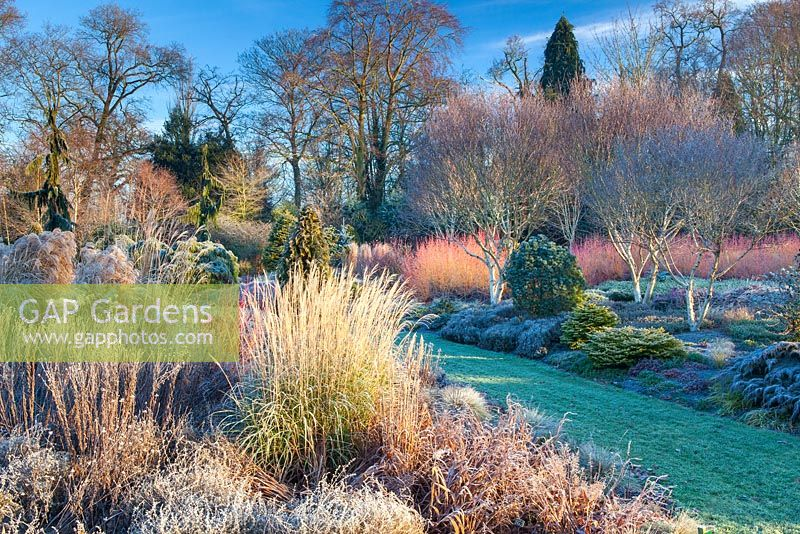 The Winter Garden, The Bressingham Gardens, January.