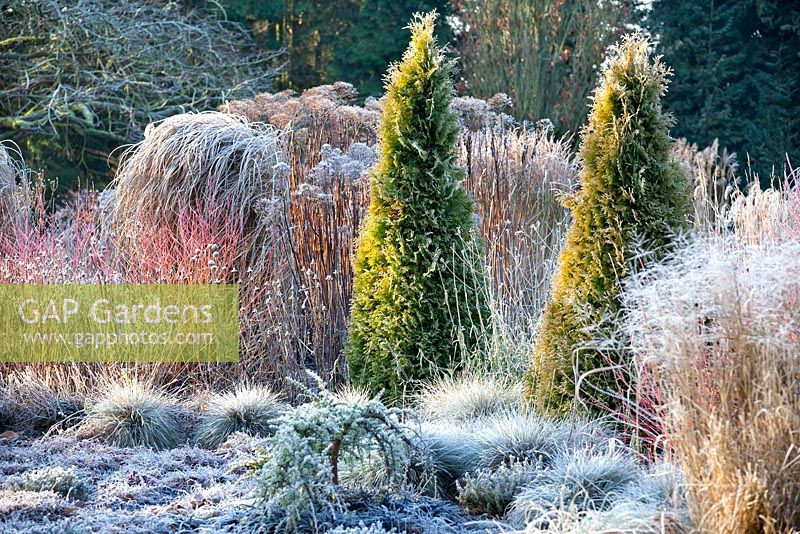 The Winter Garden in January, Bressingham Gardens, Norfolk, UK. Designed by Adrian Bloom.
