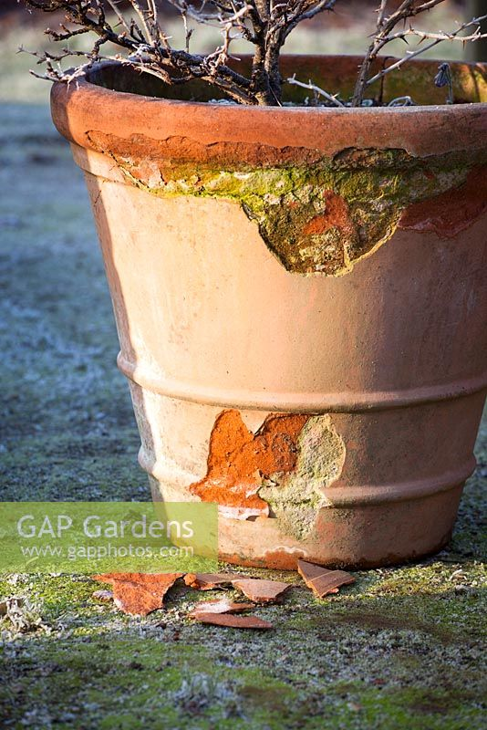 Frost damaged terracotta pot