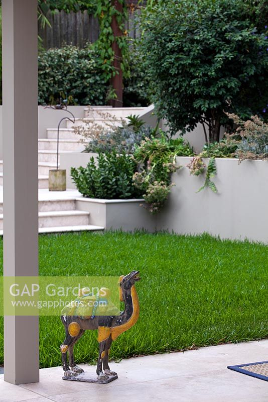 Reproduction Tang sancai glazed ceramic camel garden ornament in front of a Bouteloua dactyloides, Buffalo grass lawn with a view to an inbuilt planter box with a small shrub Ruscus hypoglossum, 'Spineless Butcher's Broom' and stairs to a terrace.