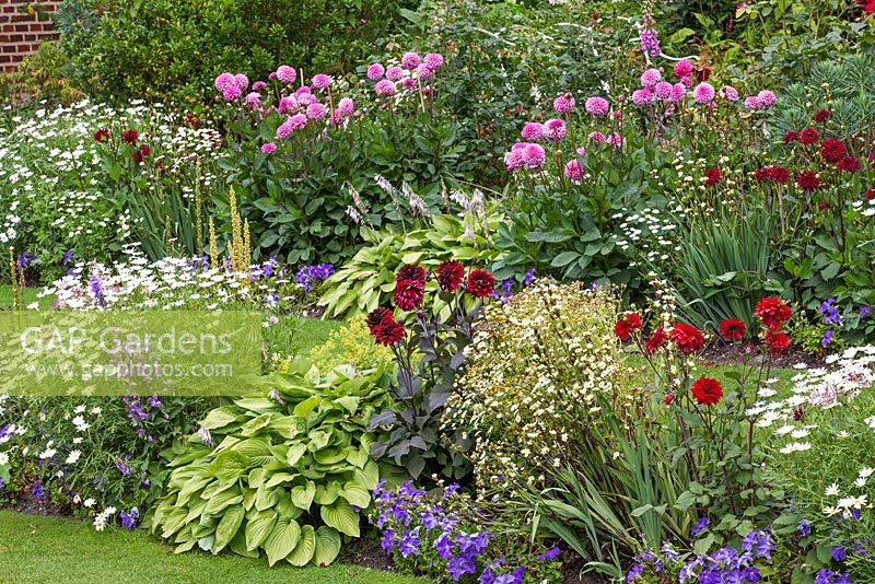 Chenies Manor summer garden - Showing double borders with Dahlia, Sisyrinchium, Petunia, Hosta, Argyranthemum, Tanacetum parthenium -  Chenies Manor Gardens, Bucks, UK