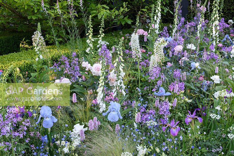The LG Smart Garden. Contemporary Lifestyle garden with soft colour theme border. Iris 'Jane Phillips', Digitalis purpurea albiflora, Persicaria superba, Hesperis matronalis, Aquilegia and roses. Designer: Hay Young Hwang. Sponsors: LG Electronics, RHS Chelsea Flower Show 2016