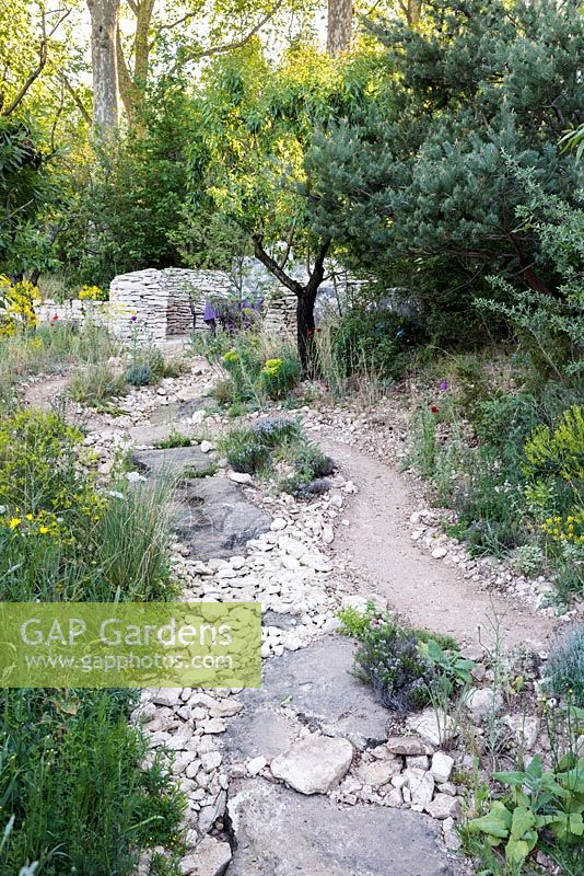 L'Occitan Garden, view of desert-like earth path with stones leading to a patio surrounded by Juglans regia, Centaurea jacea, Pinus sylvestnis, Melica ciliata, Euphorbia characias subsp. wulfenii 'John Tomlison' and Euphorbia characias. The RHS Chelsea Flower Show 2016, Designer: James Basson MSGD, Sponsor: L'Occitane en Provence