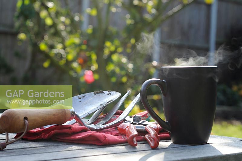 Steaming mug of coffee on garden table with with garden hand tools and Gloves, Norfolk, UK, September