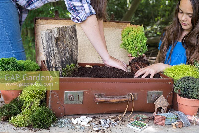 Plant the small Conifers in the corner of the suitcase