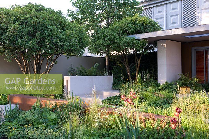 iris kent pride with baptisia cherries jubilee next to a corten steel platform with limestone wall vestra wealths garden of mindful living