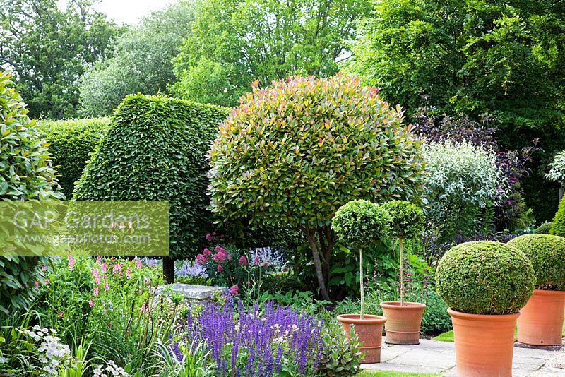 Formal English Garden With Clipped Photinia X Fraseri Red Robin Pleached Hornbeam Hedging