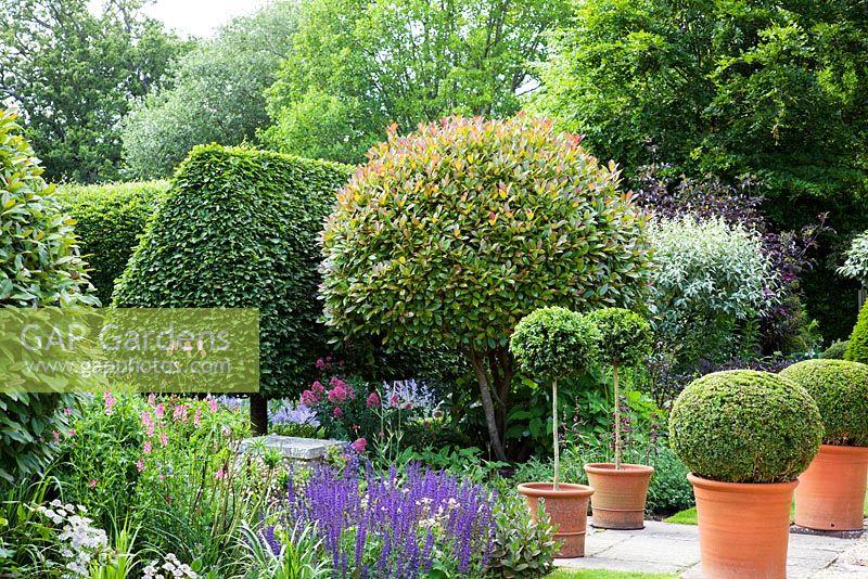 Gap Gardens Formal English Garden With Clipped Photinia X Fraseri