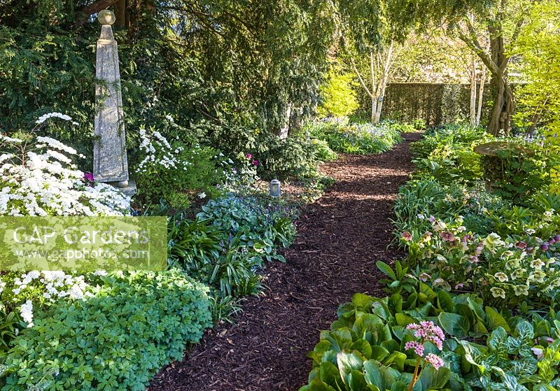 The Shade Garden in April at Wollerton Old Hall Garden, Shropshire. Plants include Hellebores, Pulmonarias, Bergenias and Exochorda macrantha