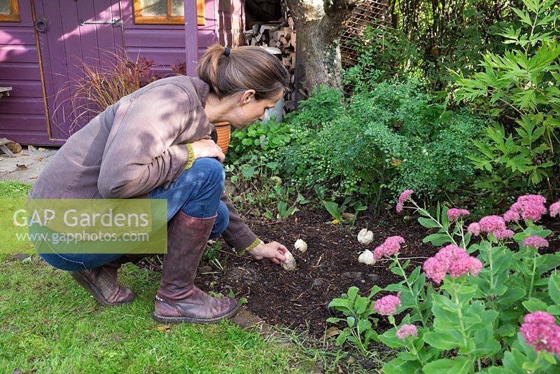 Placing Fritillaria persica bulbs in a border