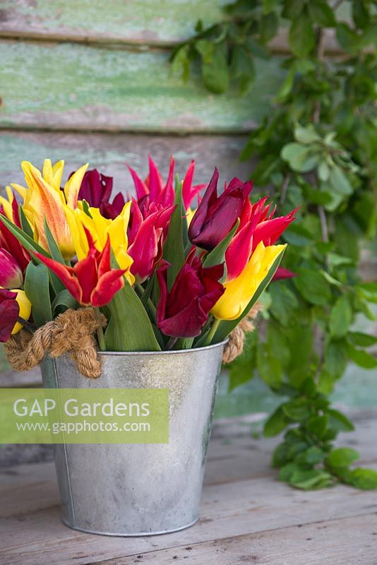 GAP Gardens Display of Tulipa Lasting Love Seattle and