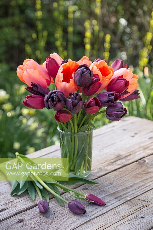 Tulipa 'Jan Reus', Tulip 'Apricot Impression', Tulip 'Havran', Tulip 'National Velvet' and Tulipa 'Cafe Noir' in glass vase with view to garden