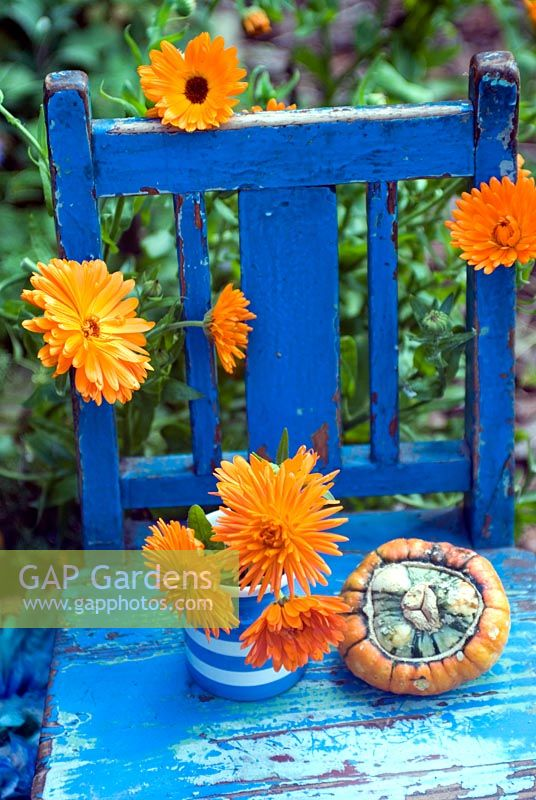 Marigolds and gourd on painted blue wooden chair