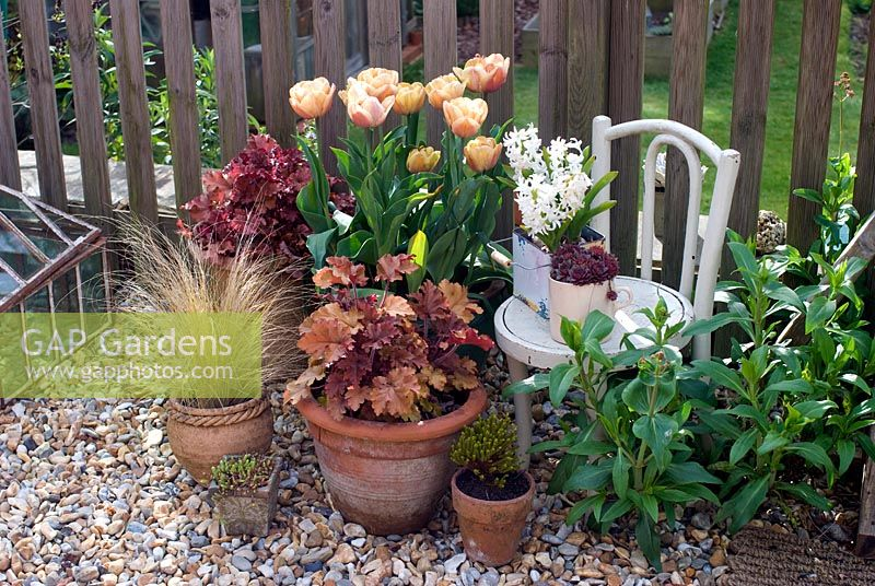 Pots with heucheras, grasses and tulips on shingled patio