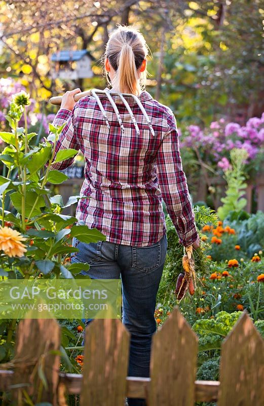 Woman harvesting vegetables in the garden.