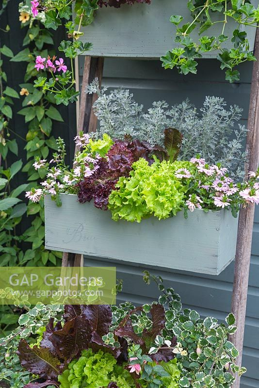 An upcycled vertical planter containing Variegated Helichrysum, Artemisia abrotanum 'Parfum d'Ethiopia', Fuchsia microphylla, Geranium 'Ville de Paris Lilac', Scaevola 'Topaz Pink', Plectranthus coleoides 'Variegatus', Fuchsia 'Claudia' and a mixed selection of Lettuce
