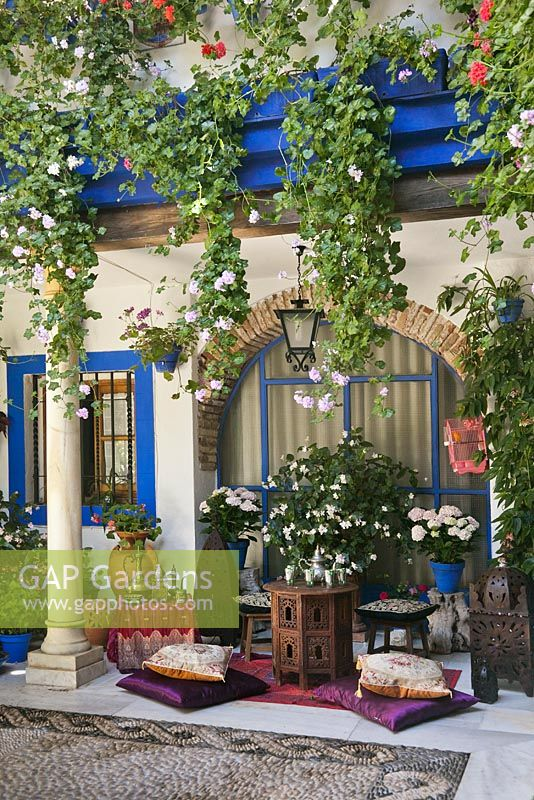 Trailing Pelargoniums, Hydrangeas And Begonias In Blue Painted Pots In Blue  And White Courtyard Garden