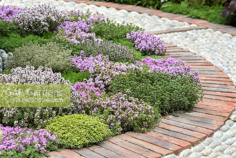 A Modern Apothecary. A circular brick and cobble path encloses a bed planted with different varieties of thyme. Designer: Jekka McVicar. RHS Chelsea Flower Show 2016