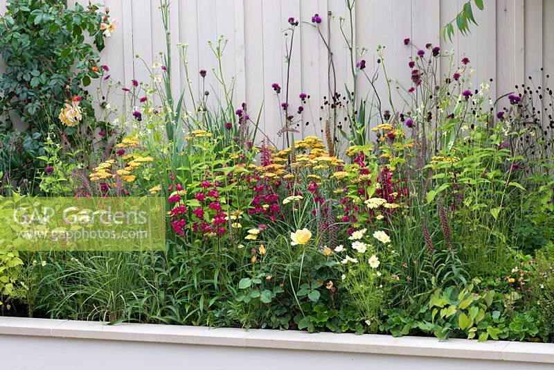 Hot coloured raised border. Planted with Penstemon, Achillea, Rosa, Cosmos, Cirsium and Digitalis. Squires 80th Anniversary Garden designed by Catherine Macdonald.