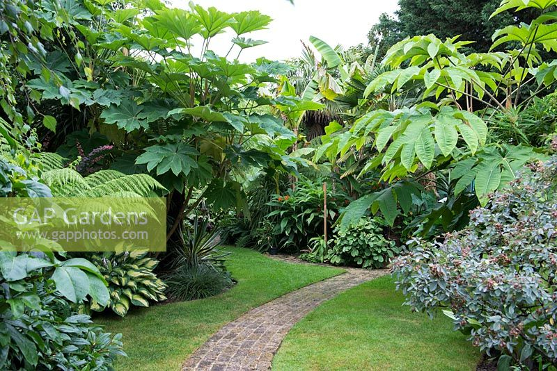 A tropical garden planted with Tetrapanax papyrifer, and tree ferns, Dicksonia antarctica. A curved brick path.