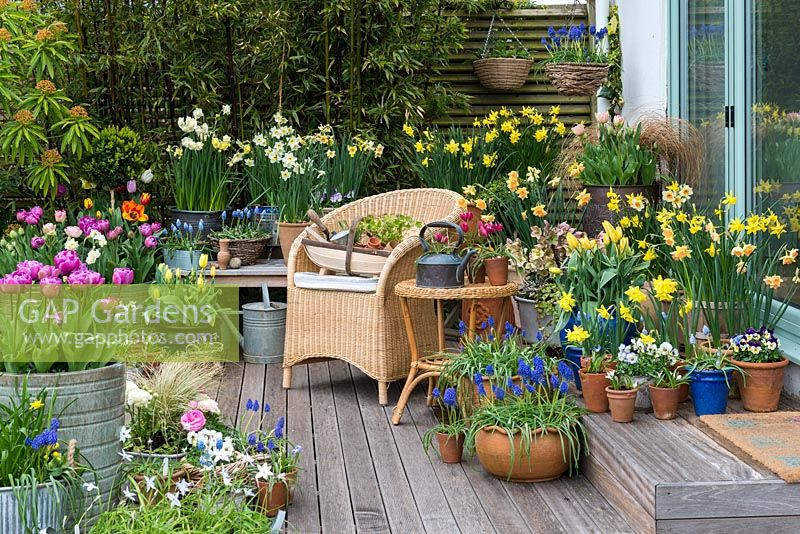 A decked seating area with colourful spring container display of daffodils, tulips, grape hyacinths and violas.
