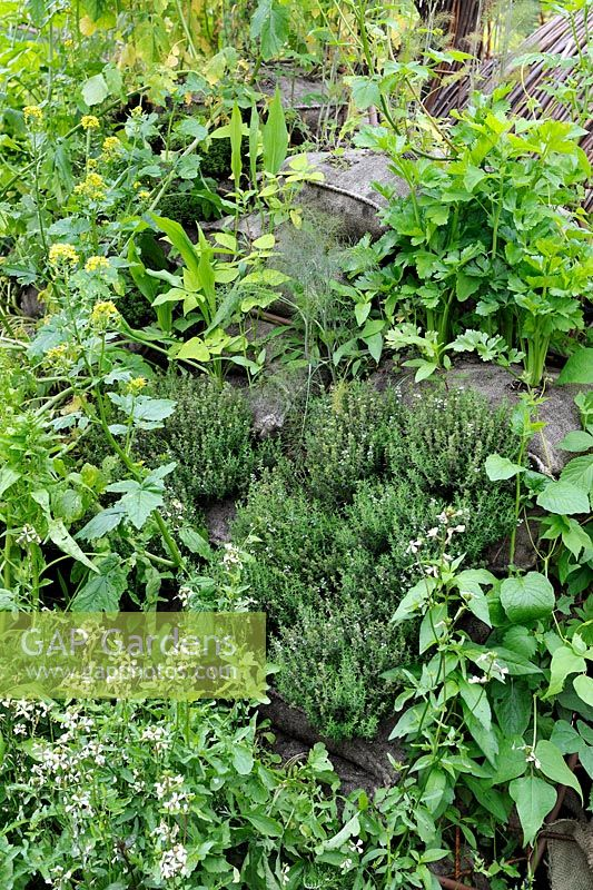 A Living Herb Wall Planted With Thyme, Rocket And Lovage