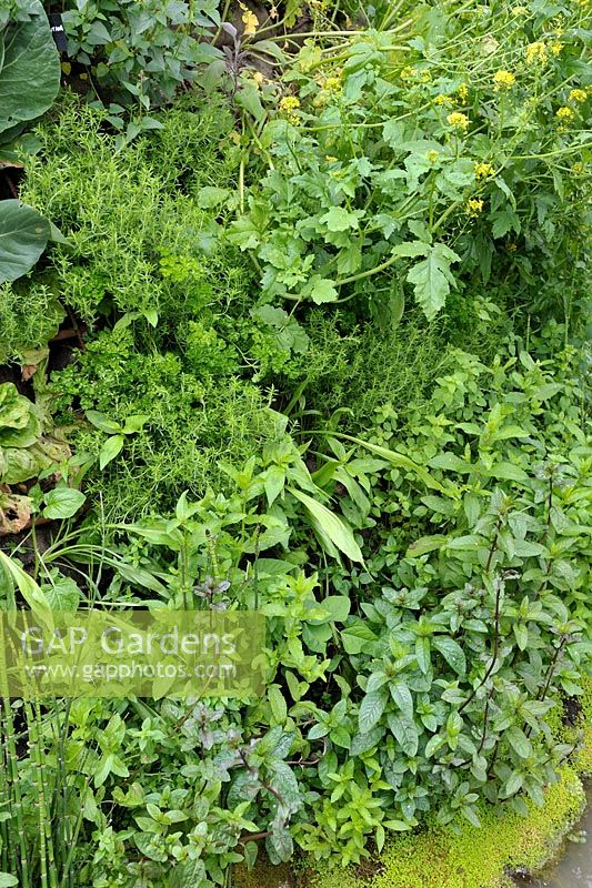 Living Herb Wall Planted With Parsley, Summer Savory And Mint