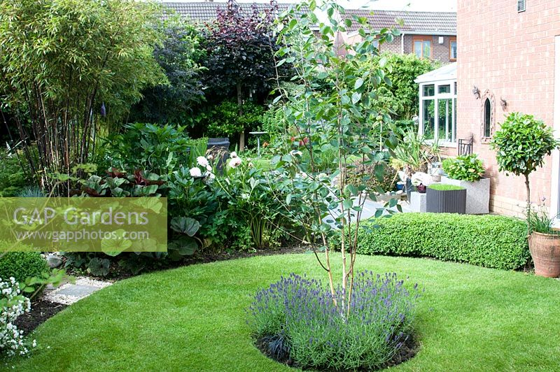 Cottage garden with circular lawn and planting of Lavandula,Phyllostachys nigra, Ligulara 'Desdemona', Paeonia and low clipped Buxus hedge