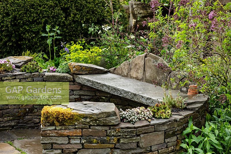 Curved stone wall seating area with succulents and naturalistic spring planting including Syringa - Lilac tree - Macmillan Legacy Garden - RHS Malvern Spring Show 2016. Designer: Mark Eveleigh, Sponsor: Macmillan Cancer Support