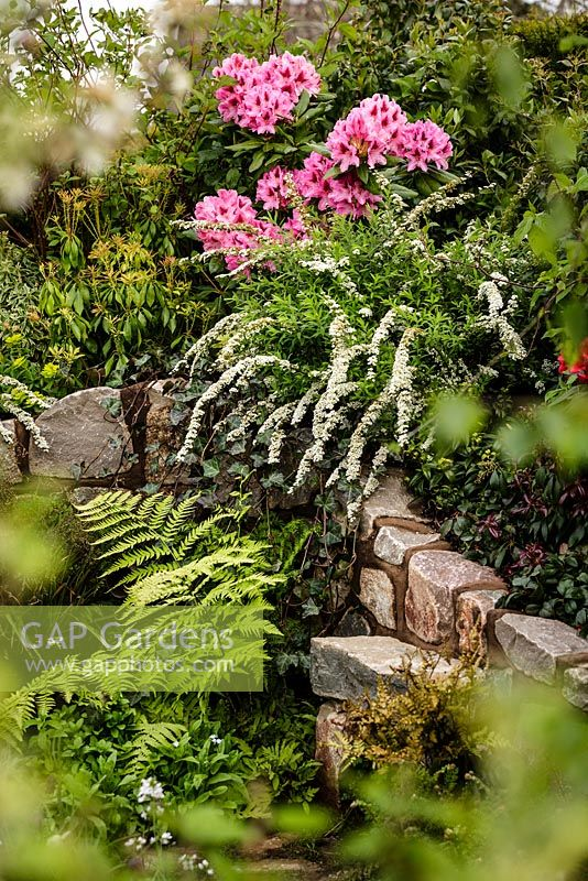 Stone wall and mixed planting including pink Rhododendron - The Water Spout garden - RHS Malvern Spring Show 2016. Designer: Christian Dowle. Sponsor: Garden Inspiration