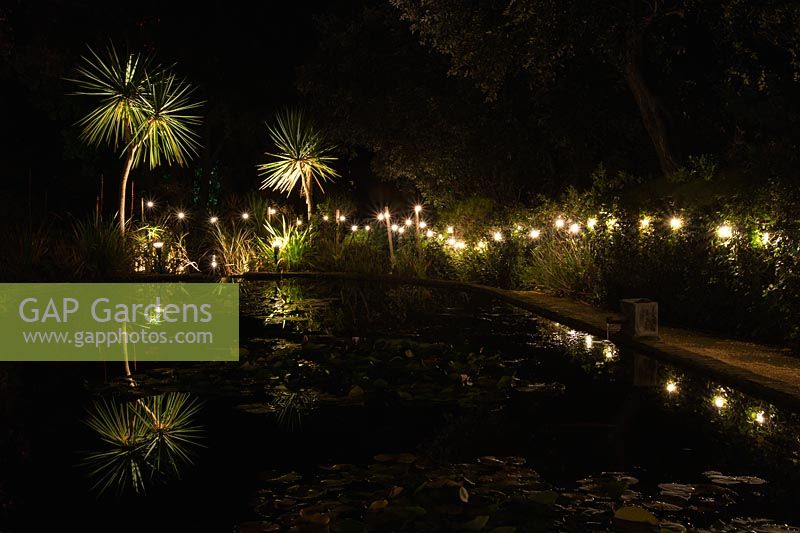 The lily ponds surrounded by white lights and cordylines reflected in the water at Abbotsbury Subtropical Gardens in October