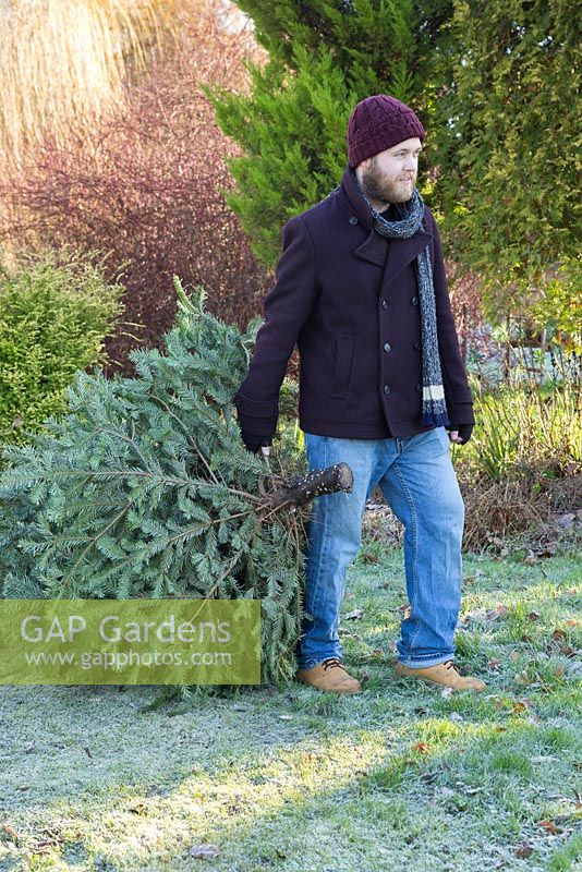 A man dragging a Christmas tree across a frosty lawn