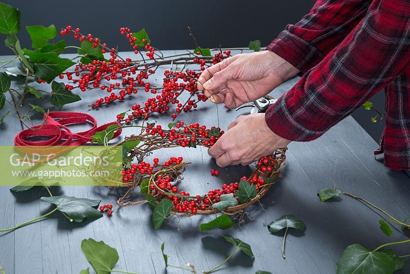 Using the stub wire to secure the Ilex aquifolium to the wreath