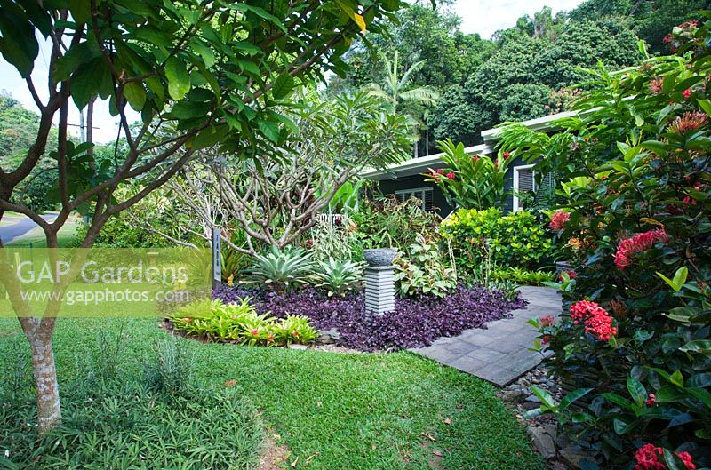 Garden in front of house with curved garden beds, grey concrete paving, lawn and a mixed planting of trees and shrubs featuring a rustic stone bowl pot on a ribbed cement plinth with an underplanting of purple leaved, Hemigraphis colorata and bromeliads.