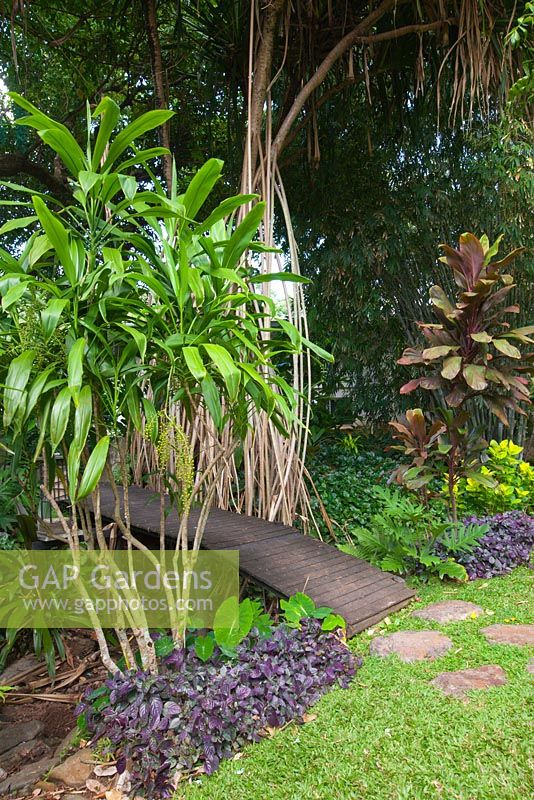 A Dracaena species growing next to a timber bridge that is over a seasonal creek featuring Hemigraphis colorata, waffle plant with purple foliage and a Pandanus tectorius with aerial roots.