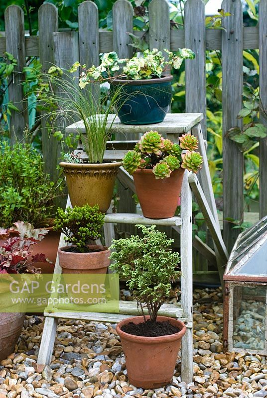 Autumn containers with grasses, succulents and evergreens