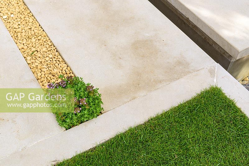 Detail of Darleymoor Buff Yorkstone paving with gravel and Thyme bush. Squire's 80th Anniversary Garden, RHS Hampton Court Flower Show 2016