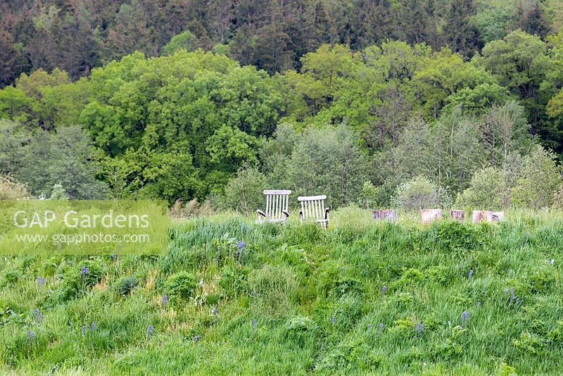 Wooden recliners sit in the middle of one of the wildflower meadows, featuring Camassia leichtlinii in the foreground