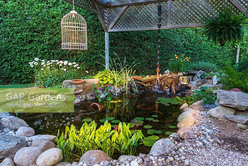 Illuminated rock edged pond with cascading waterfall and Pontederia cordata - Pickerel Weed, pink Nymphaea - Water Lilies, Typha latifolia - Common Cattails bordered by Hosta, white Leucanthemum vulgare - Ox-eye daisy and orange Hemerocallis - Dayllily flowers at dusk in summer