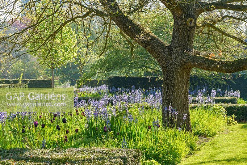 Flower Garden Under Oak Tree Flowers Healthy
