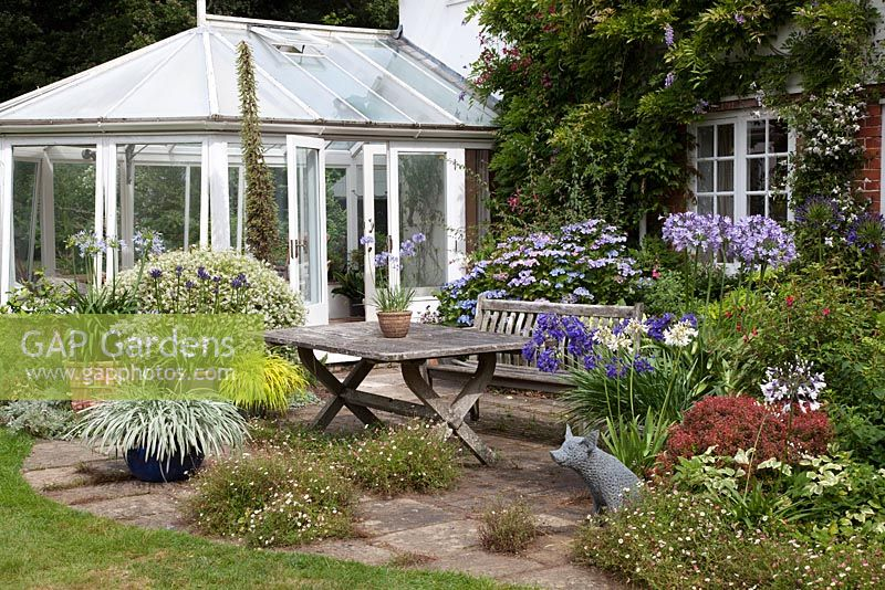 Table and chairs with conservatory in cottage garden. Agapanthus 'Silver Moon', Agapanthus 'Pretty Sandy' Agapanthus, 'Pretty Heidi', Agapanthus 'White Heaven', Agapanthus 'Megans Mauve', Agapanthus 'Hoyland Blue'
