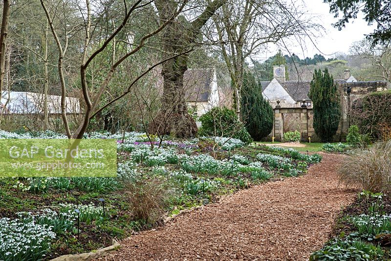 Colesbourne Park, Gloucestershire showing Galanthus nivalis and path leading to gate - February