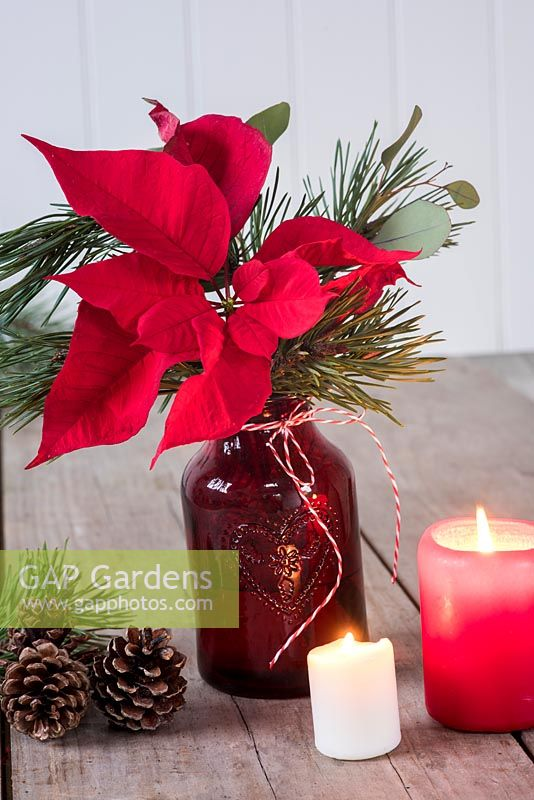 Poinsettia arranged in red glass vase with pine foliage and candles