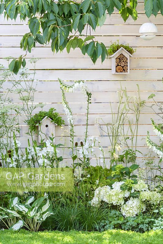Brunnera macrophylla 'Jack Frost', Astilbe x arendsii 'Bridal Veil', Digitalis purpurea 'Albiflora', Hosta 'Fire and Ice', Ammi majus, Hydrangea macrophylla 'Nymphe' along white painted timber wall with birdboxe and insect hotels - Living Landscapes 'City Twitchers' garden, RHS Hampton Court Flower Show 2015. Designed by Sarah Keyser. CouCou Design