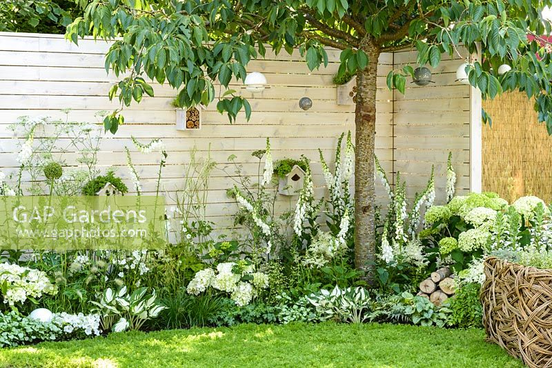 Prunus 'Tai Haku' tree, Brunnera macrophylla 'Jack Frost', Astilbe x arendsii 'Bridal Veil', Digitalis purpurea 'Albiflora', Hosta 'Fire and Ice', Ammi majus, Hydrangea macrophylla 'Nymphe' along white painted timber wall with birdboxes and insect hotels - Living Landscapes 'City Twitchers' garden, RHS Hampton Court Flower Show 2015. Designed by Sarah Keyser. CouCou Design